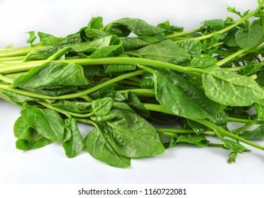 Fresh Ceylon Spinach green plant vegetable isolated  on white background / Basella alba - Malabar Nightshade