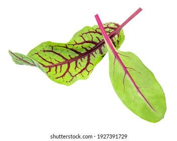 Fresh chard leaf and beetroot leaves isolated on white background. Close-up