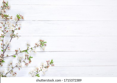 Fresh cherry blossom on white painted wooden planks. Selective focus. Copy space