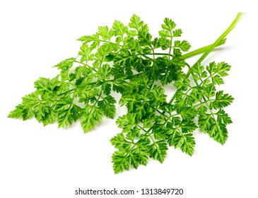 fresh chervil isolated on white background