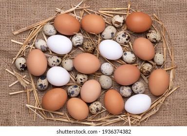 Poulets frais, oeufs marron et blancs et oeufs de caille sur fond noir, vue de dessus