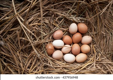 fresh chicken eggs with nest,A pile of brown eggs in a nest