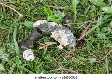 Fresh chicken excrement on green grass close-up