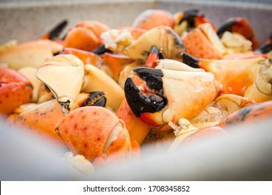 Fresh Chilled Stone Crab Claws