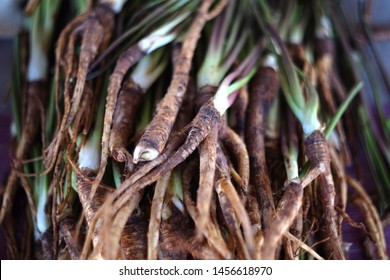 Fresh chinese dang gui root, angelica sinensis, traditional herbal medicine
