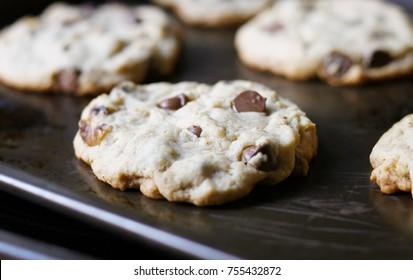 Fresh Chocolate Chip Walnut Cookies