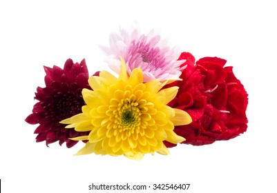 fresh of chrysanthemum flowers isolated on white background