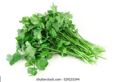 fresh cilantro coriander isolated on white background