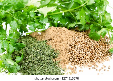 Fresh cilantro leaves and piles of dried cilantro leaves, whole coriander seeds and coriander powder.