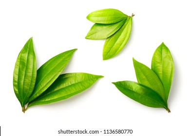 fresh cinnamon leaves isolated on white background