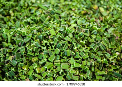 Fresh Cissus Quadrangularis Linn. Edible Stemed Vine herb for pain treatment. Natural medicine