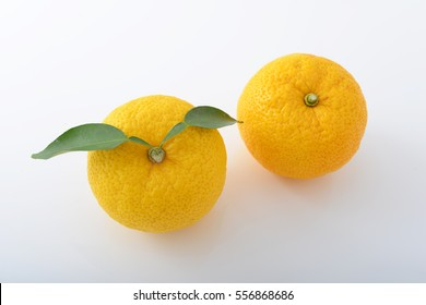 Fresh citrus junos