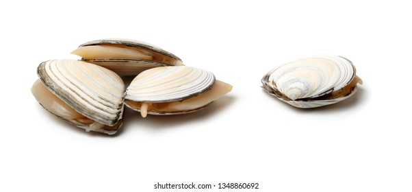 Fresh Clam isolated on white