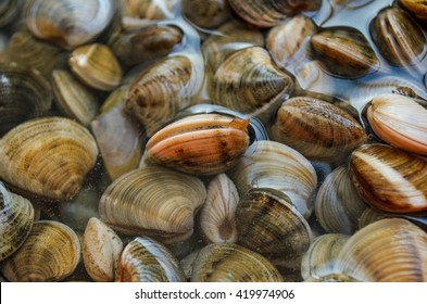 Fresh clams background, seashells close up, Mazagon, Huelva, Spain