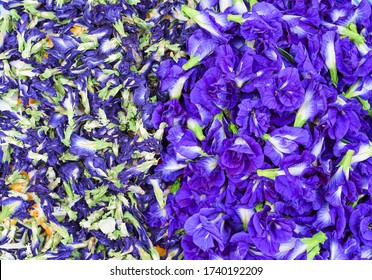 Fresh clitoria ternatea flower texture and dried clitoria ternatea tea background top view