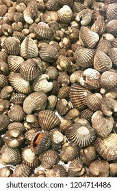 fresh cockle in the market, raw sea cockles for sale at market use for cook steamed, blanched cockle.