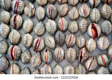 fresh cockle in the market at Thailand. brown cockles abstract background.seafood on ice. Tegillarca granosa, scallop, raw sea cockles for sale at seafood market use for cook steamed.