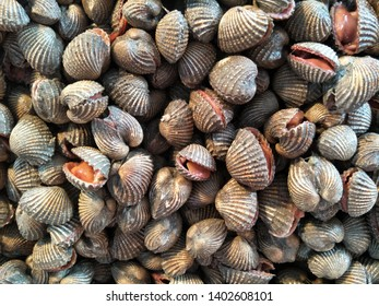 fresh cockle in the market at Thailand  brown cockles abstract background seafood