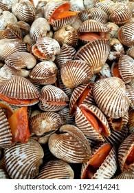 Fresh cockles in deep sea.