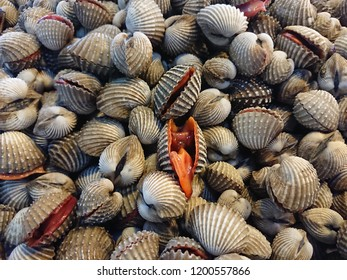 Fresh Cockles full frame abstract background. Tegillarca granosa, scallop for sale at thailand market.
