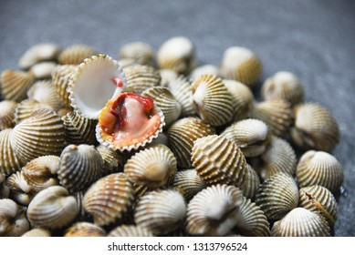 Fresh Cockles Shellfish Seafood on dark background - raw blood cockle