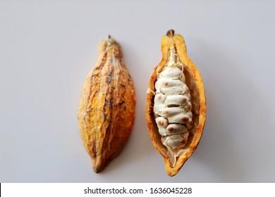 Fresh cocoa fruits isolated  on white background