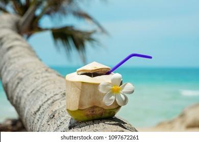 Fresh coconut on a palm tree at the thai beach
