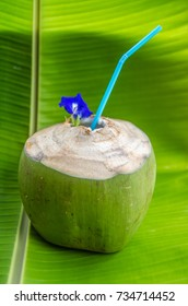 Fresh coconut water decorated by pea flowers on the rice field background.