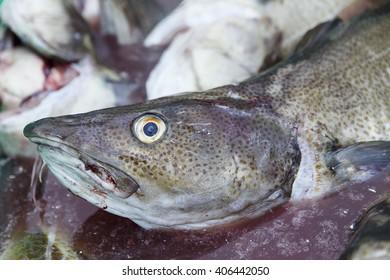 fresh cod-lofoten