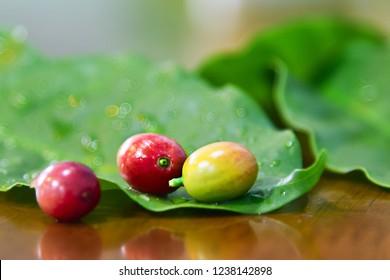 Fresh Coffee bean Arabica.