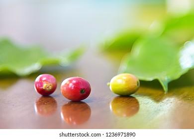 Fresh Coffee bean on wood table