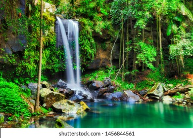 Fresh cold scenic Tamborine waterfall in Tamborine national park of Queensland, Australia. Lush wet rainforest with evergreen vegetation around clean water pool.