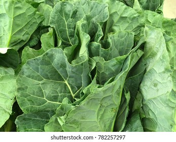 Fresh Collards Close Up