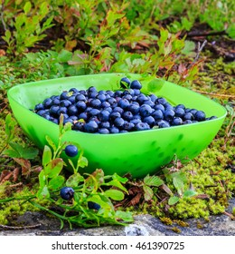 Fresh collected in mountains blueberries fruit in bowl, outdoors.