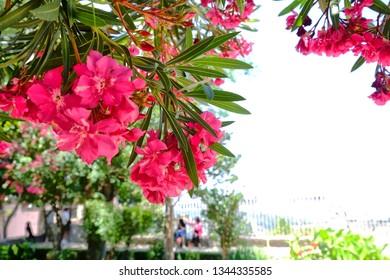 Fresh colorful flowers in Ronda, Spain