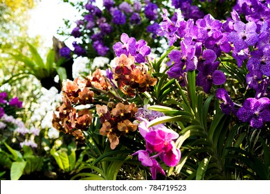 Fresh and colorful orchids.