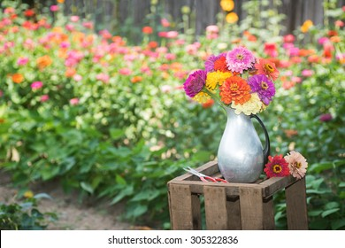 Fresh, Colorful Zinnia Flower Bouquet in a Tin Pitcher Vase on a Wood Crate against Floral Garden Background with room or space for copy, text, your words.  Horizontal outside in Portland Oregon, USA