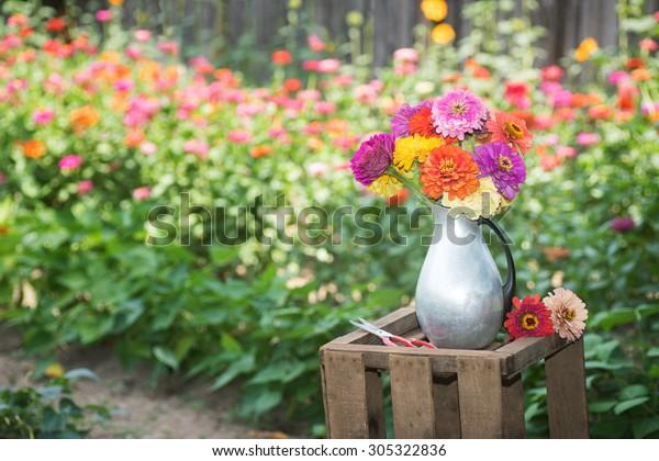 Fresh Colorful Zinnia Flower Bouquet Tin Stock Photo Edit Now 305322836