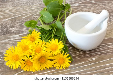 fresh coltsfoot with mortar and pestle