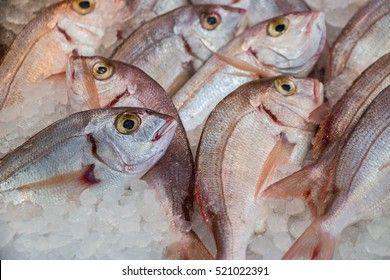 Fresh common pandora or Pagellus erythrinus, lithrini fishes on ice in the greek fish shop lined up for sale. Common pandora fishes on ice at fish shop. Horizontal. Daylight. Close up.