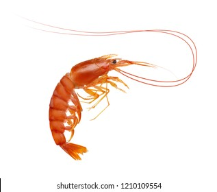 Fresh cooked shrimp isolated on white . Seafood.