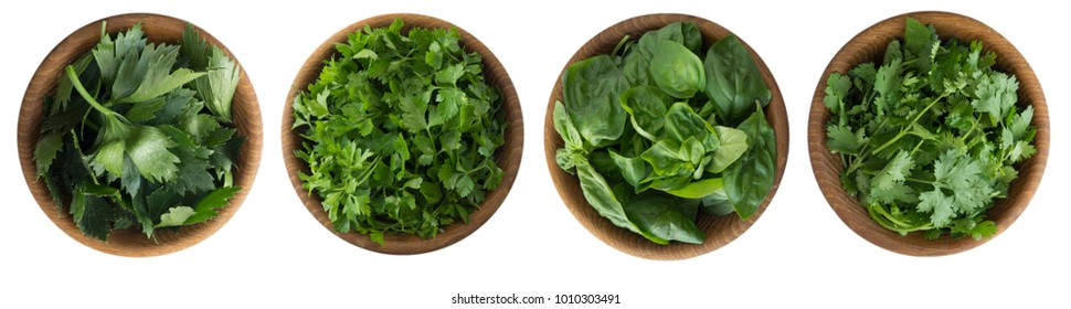 Fresh coriander, celery, cilantro and basil leaves in wooden bowl isolated on white background. Top view. Herbs with copy space for text.