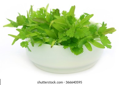 Fresh coriander leaves in a bowl over white background