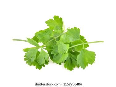 fresh coriander leaves over white background