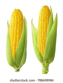 Fresh corn ears with leaves set isolated on white background as package design element