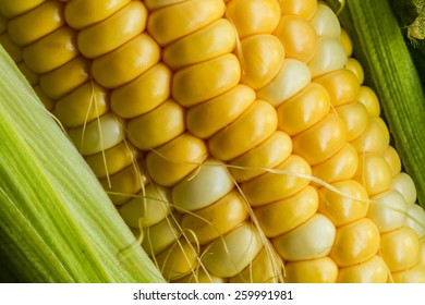 Fresh corn on a cob with husk