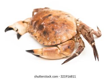 Fresh crab isolated on white