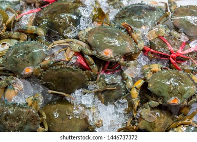 Fresh crabs in seafood market. arthropod phylum. armature and claw concept. Fresh sea crab that are bound and prepare to sell in fresh market. Fresh Crabs tie with rope. sea food. In the Thai market.