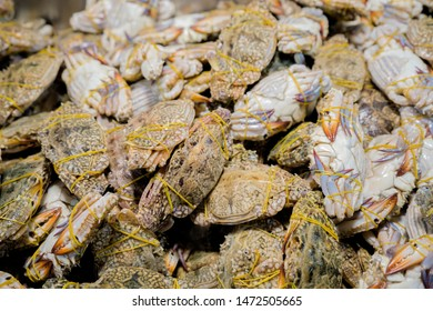 Fresh crabs in seafood market. arthropod phylum. armature and claw concept. Fresh sea crab that are bound and prepare to sell in fresh market. Fresh Crabs Tied with rubber,sea food. In the Thai market