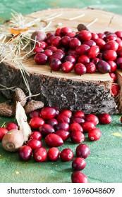 fresh cranberries on a tree cut
